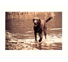 Dog in Water Art Print