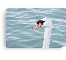 Mute Swan Head Canvas Print