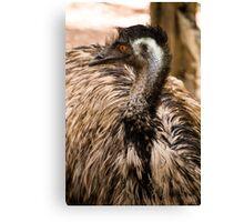 Emu at Healesville Sanctuary   Canvas Print