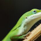Feeling Green by Leighton Jack