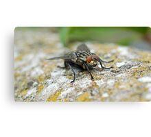 Macro Fly Canvas Print