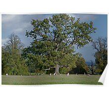 Studley Royal, Studley Roger, Ripon, North Yorkshire, England Poster