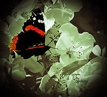 Red Admiral Butterfly by Rosemary Sobiera