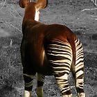 Okapi by starbucksgirl26