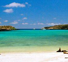 Island Beach, Galapagos Islands, Ecuador by Paris Lee