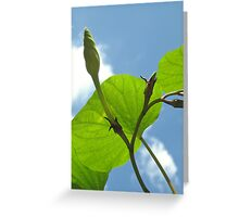 Moonflower Vine Bud to the Sky Greeting Card