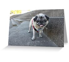 Abby Girl Greeting Card
