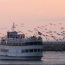 Sunset  Cruise  by Gloria Abbey