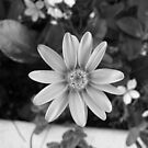 Blooming in black and white by fourthangel