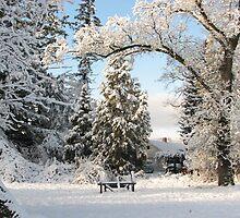 Winter wonderland! by goddessteri211