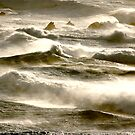waves lizard coast by sparrowdk