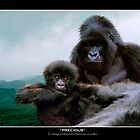 &quot;Precious&quot; (Mountain Gorillas) by Skye Ryan-Evans