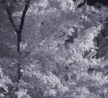 Infrared Tree Sticker