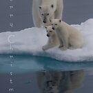 Polar Reflections - Christmas Card by Steve Bulford