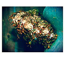 Paper Wasp Nest #2 Photographic Print