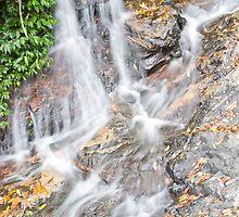Tristania Falls, Dorrigo National Park, NSW, Australia by Adrian Paul