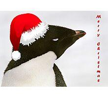 Sleeping Adelie - Christmas Card Photographic Print
