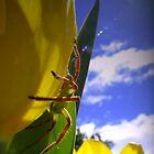 Spider by Josie Jackson