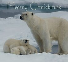 Hey Mum! - Christmas Card by Steve Bulford