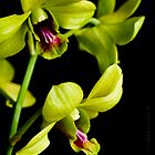 Orchid... by Janine  Hewlett