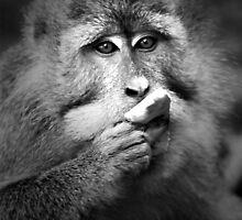 monkey by balibliss