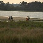 Wild Chincoteague Ponies by kimbarose