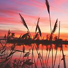 Fall Sunset On The Marsh by Jamie Wogan Edwards