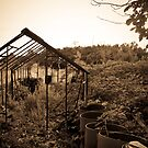 Tragedy of a Lost Allotment by Rob Davies