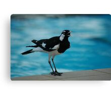 Pee Wee by the pool Canvas Print