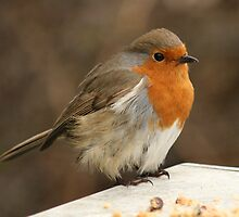A friendly bird by Steve Etheridge
