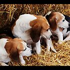 Puppy Love by ©FoxfireGallery / FloorOne Photography