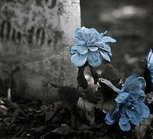 Wolcott Cemetery by podsix