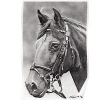 horse portrait (4692) Poster