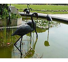 Bronze flamingos Photographic Print