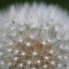 Autumn Wish by Pamela Jayne Smith