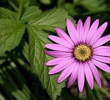 Purple Flower by Silverla