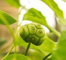 Green Ball by lm31