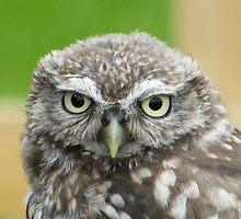 Baby owl by Dodgygeeza