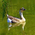 Swimming Around by R&PChristianDesign &Photography