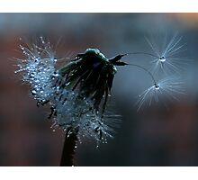 Glistening by Twilight Photographic Print