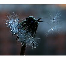 Glistening by Twilight Photographic Print