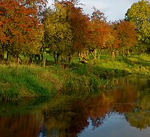 Ireland In Autumn II by Aishling O'Neill