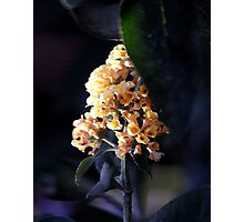 Butterfly Bush Blossom Photographic Print