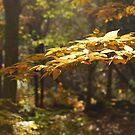 Golden Forest by Robin Webster
