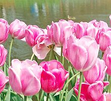Pink tulips at the Keukenhof - Netherlands by Arie Koene