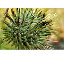 Warning, Thistle Photographic Print