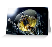 Face of a Fly Greeting Card