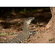 Goanna! Photographic Print
