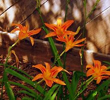 Shady Flowers by R&PChristianDesign &Photography