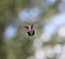 Tiny Hummingbird floating in space / Huitzilli by Lizzy Doe